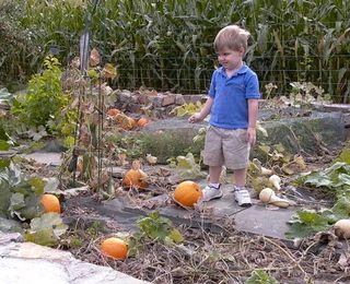 Pumpkin David #1