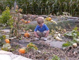 Pumpkin David #2