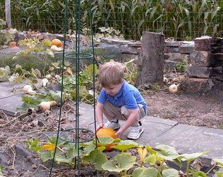 Pumpkin David #3