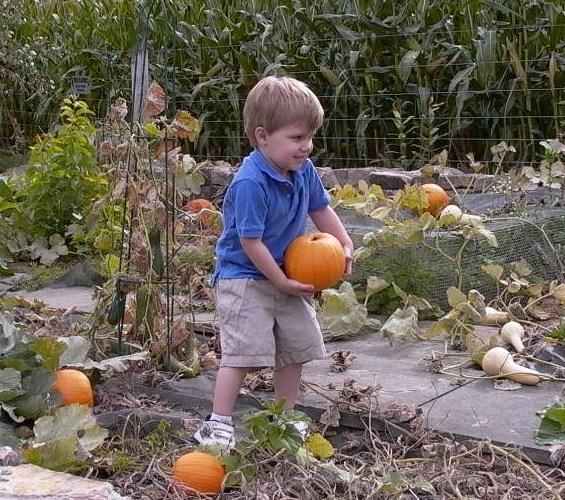 Pumpkin David #5
