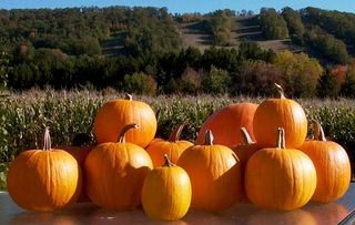 Roasted Pumpkins of Tussey Mountain #2