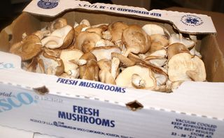 Shiitake Mushrooms #3 (Mushrooms in Boxes Closeup)