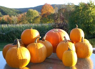 Roasted Pumpkins of Tussey Mountain #1