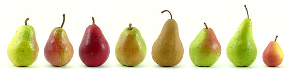 600px-Eight_varieties_of_pears