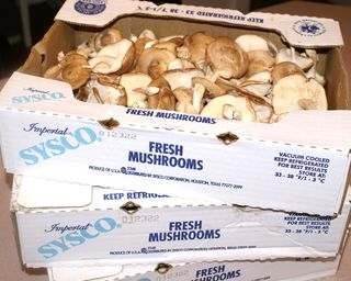 Shiitake Mushrooms #2 (Mushrooms In Boxes)
