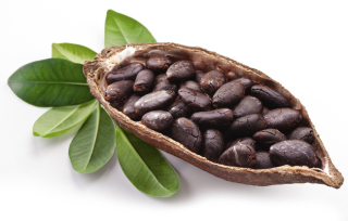 Embedded_raw_cocoa_beans_toxic